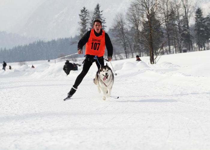 Schlittenhunderennen in Angerberg