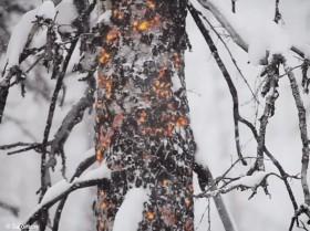 Waldbrand Schnee