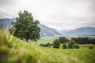 Saalfelden Leogang Trailrunning