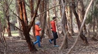 Wald-wandern-Australien