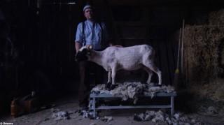 Ortovox Produkte mit schafwolle