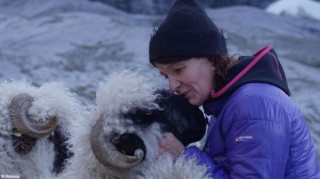 Schaf mit Bäuerin