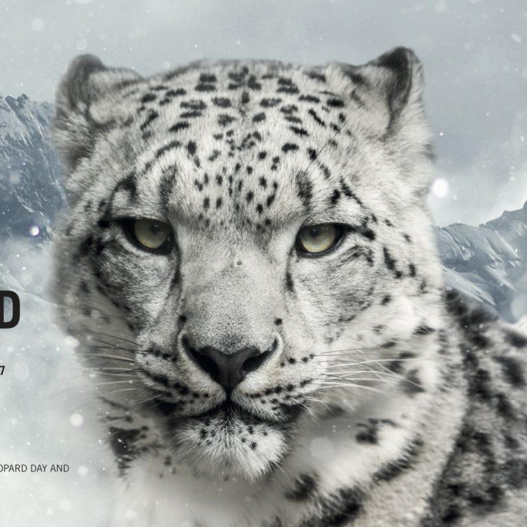 DYNAFIT_SNOWLEOPARD_17