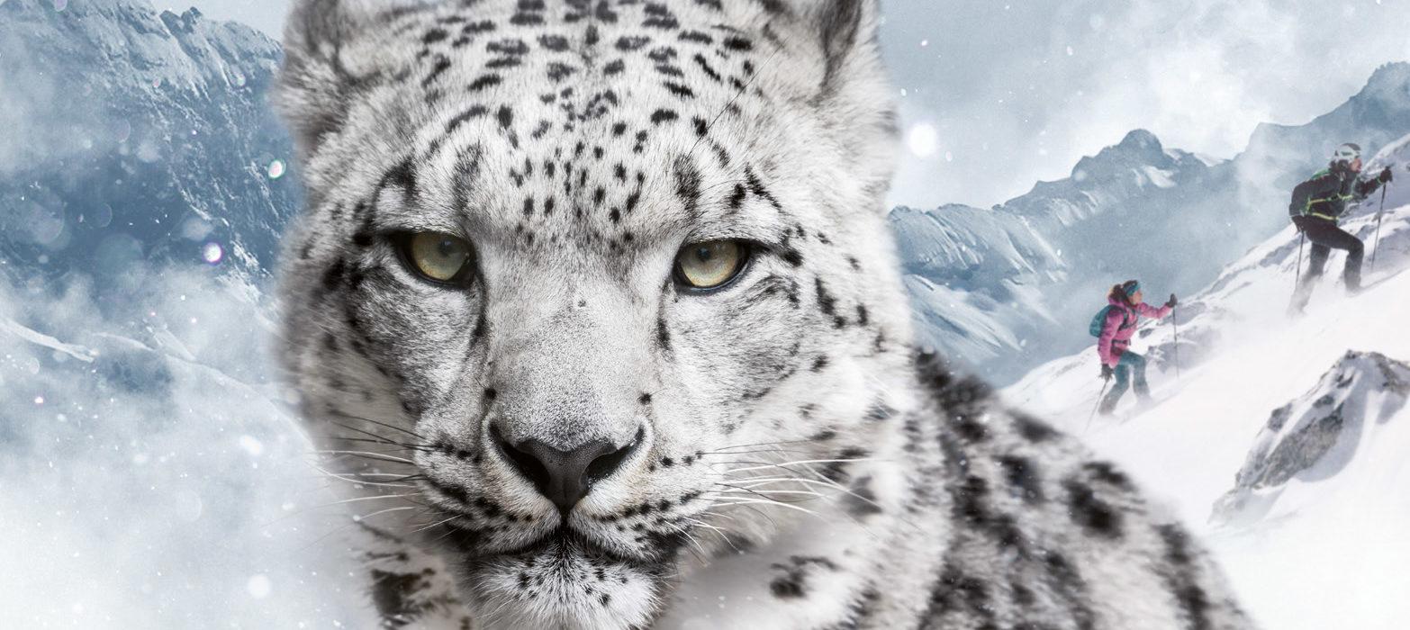 dynafit snow leopard day 2017