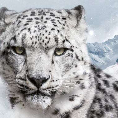 dynafit snow leopard day 2017