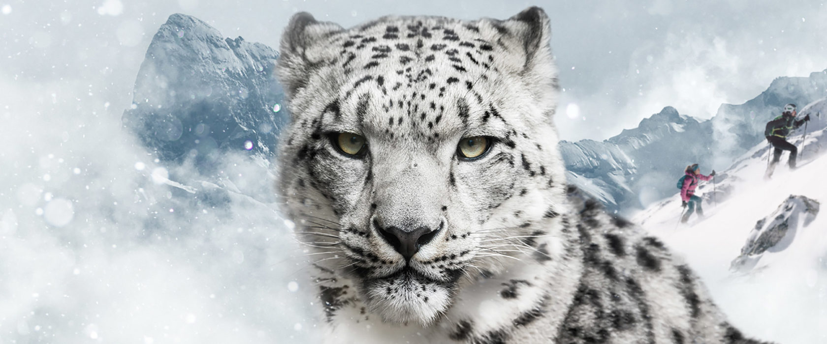 Dynafit-Snow-Leopard-Day