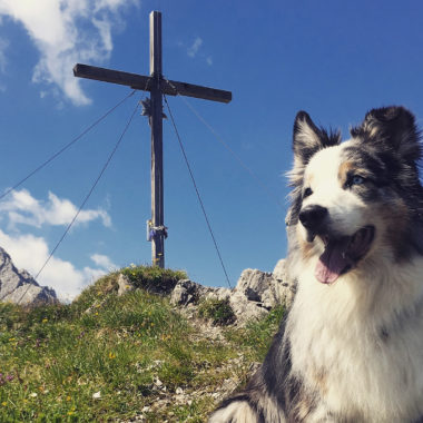 Hund Wanderung